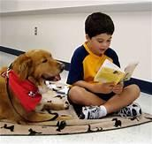 Therapy dog reading